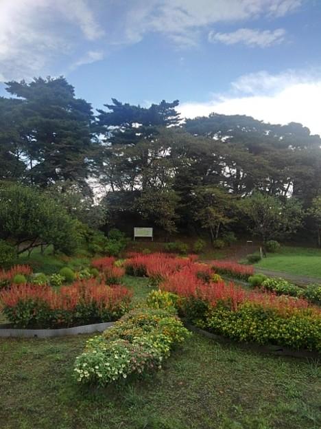 Photos: 烏ヶ森公園の花びらのような形の花壇