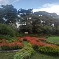 烏ヶ森公園の花びらのような形の花壇