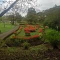烏ヶ森公園のサルビア花壇