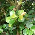 庭の葉(9月12日)