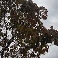 公園の並木(9月13日)