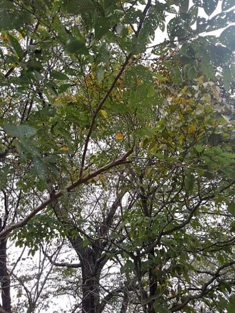 公園の木の天井(9月13日)