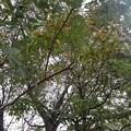 Photos: 公園の木の天井(9月13日)