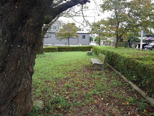 小さな公園の秋色風景(9月13日)