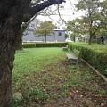Photos: 小さな公園の秋色風景(9月13日)