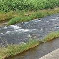 流れが早い川(9月16日)