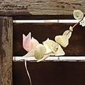 白い葉と焦茶の壁(9月17日)
