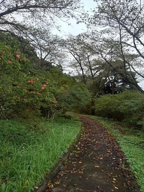 丘の秋のツツジもある道(9月20日)