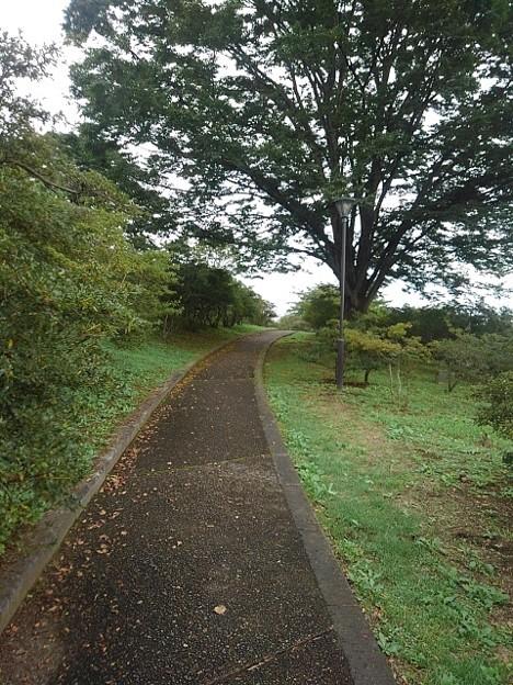 公園の丘のなだらかな道(9月20日)