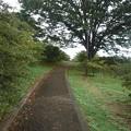 Photos: 公園の丘のなだらかな道(9月20日)