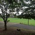 公園の広場近く道(9月20日)