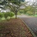 公園の落ち葉の道(9月20日)
