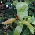 庭の緑の葉(9月24日)