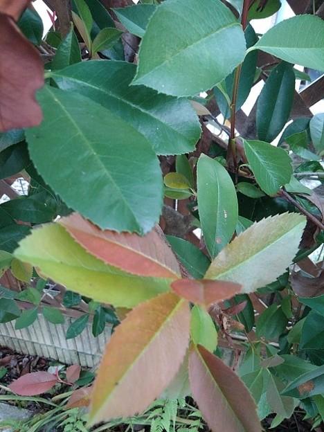 庭のカラフルな葉(9月24日)