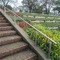 階段の近くの花壇(9月20日)