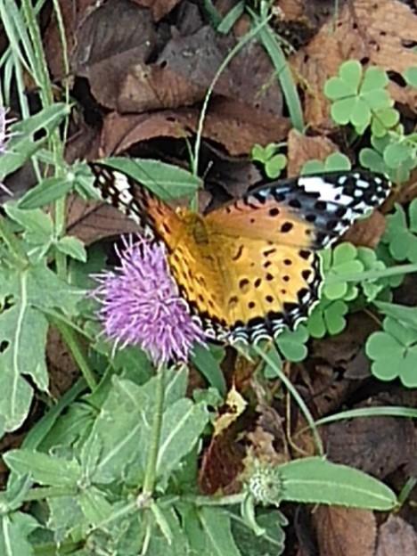 公園の蝶(10月11日)