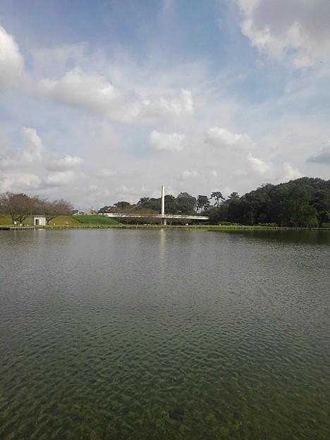 奥に白い陸橋が見える池(9月21日) (1)