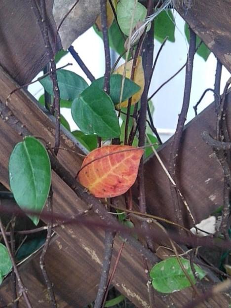 格子状の壁と赤い葉(10月4日)