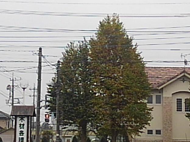 街路樹(10月5日)