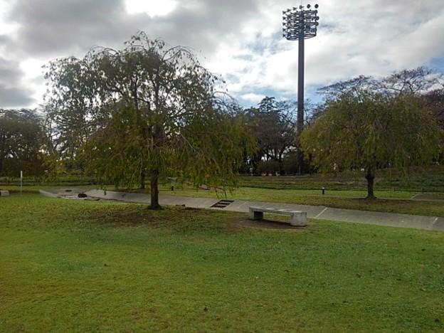 芝生の広場(10月11日)