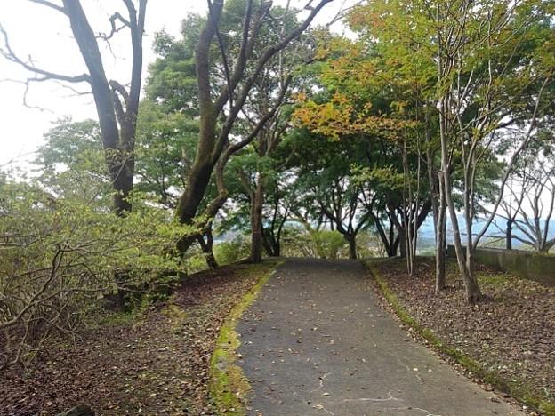 丘の道(10月11日)