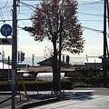 Photos: 街路樹(10月30日)