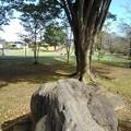 岩とモミジの広場(10月16日)