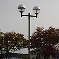 街灯と街路樹(10月28日)