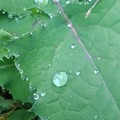 庭の雑草の雫(10月23日)
