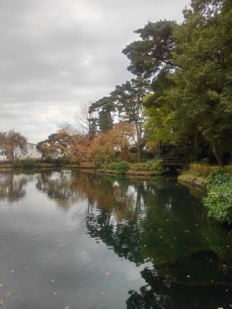 公園の池(11月7日)