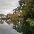 Photos: 公園の池(11月7日)