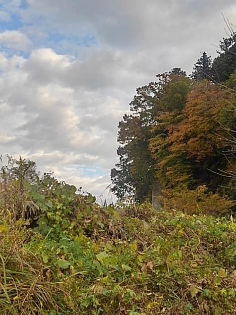 崖の紅葉(11月7日)