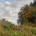 Photos: 崖の紅葉(11月7日)