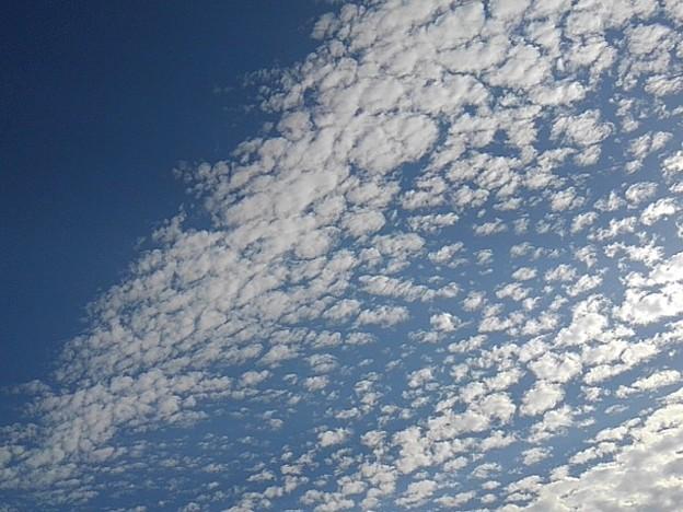 Photos: 鱗雲と青空(11月8日)