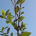 庭の葉(10月30日)