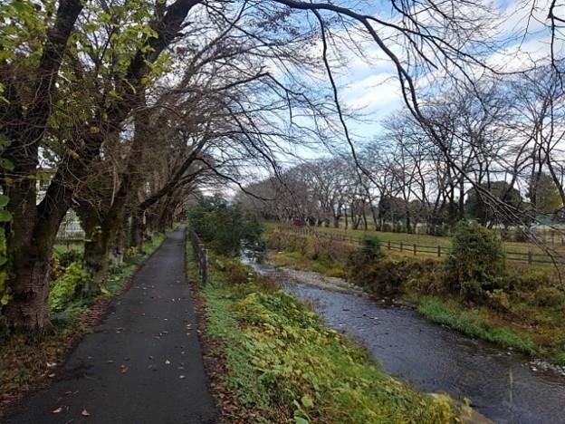 地元の川の道(11月3日)