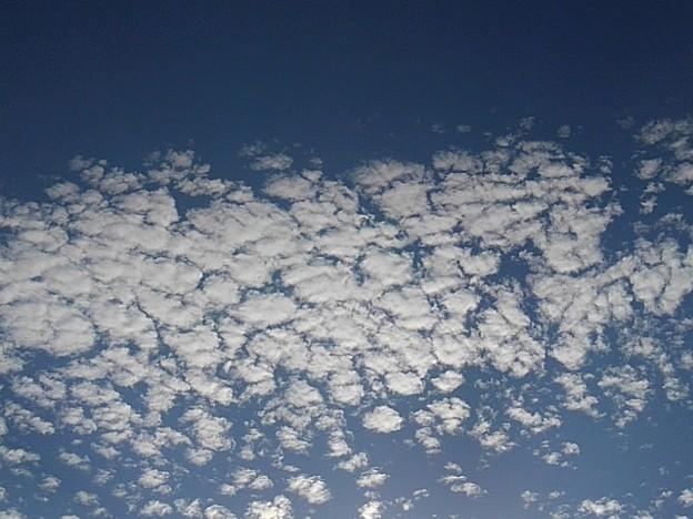 Photos: 綺麗な鱗雲(11月8日)