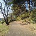 烏ヶ森公園の緑の道(10月31日)