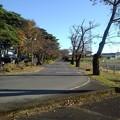 烏ヶ森公園のアスファルトの道(10月31日)