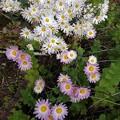 庭の花(11月10日)