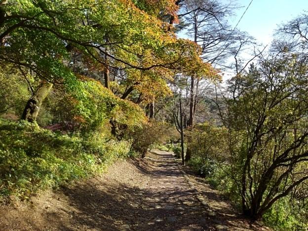 烏ヶ森公園の丘のモミジロード その1(10月31日)