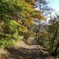 Photos: 烏ヶ森公園の丘のモミジロード その1(10月31日)