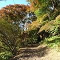 烏ヶ森公園の丘のモミジロード その2(10月31日)