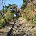 烏ヶ森公園の丘のカラフル紅葉の道(10月31日)