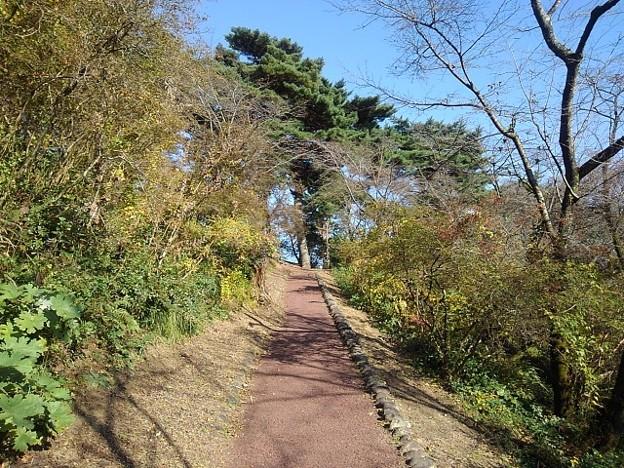Photos: 烏ヶ森公園の丘の秋晴れの道(10月31日)