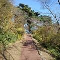 烏ヶ森公園の丘の秋晴れの道(10月31日)