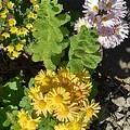 黄色い花(11月13日)