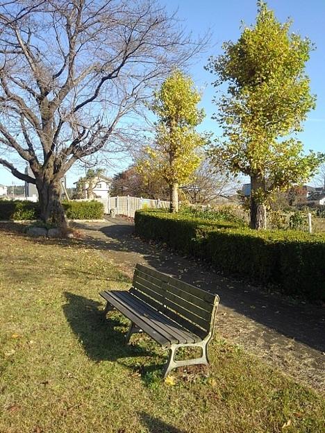 小さな公園のベンチ(11月15日)
