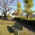 Photos: 小さな公園のベンチ(11月15日)