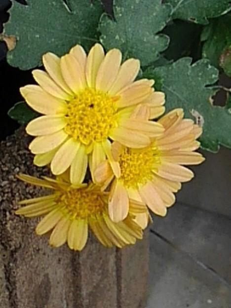 小さな花(11月19日)